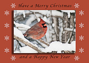 New Years Prints - Merry Christmas Cardinal Print by Michael Peychich