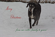 Christmas Dogs Prints - Merry Christmas Critters Hershey Print by Robyn Stacey
