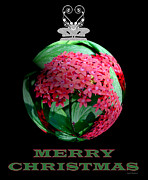 Gardens And Flowers - Merry Christmas  by Crystal Wightman