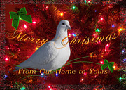 Edwards Digital Art - Merry Christmas Dove by J C Edwards