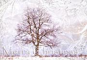 Merry Christmas Print by Jenny Rainbow