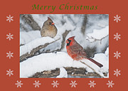 Michael Peychich - Merry Christmas Pair of Cardinals