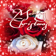 Gayle Price Thomas - Merry Christmas Roses