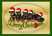 Christmas Dogs Digital Art Prints - Merry Christmas Rottweiler Puppies Greeting Card Print by Tracey Harrington-Simpson
