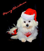 Maltese Dog Posters - Merry Christmas...... Poster by Tanya Tanski