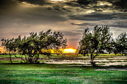 Galveston Prints - Mesquite Sunset HDR Print by David Morefield