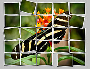 Creative Manipulation Photo Prints - Messed up butterfly Print by Jean Noren