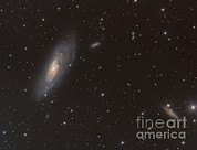 M106 Posters - Messier 106 Spiral Galaxy Poster by Reinhold Wittich