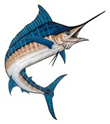 Tropical Fish Drawings Posters - Metal Marlin Realistic Poster by Carol Lynne