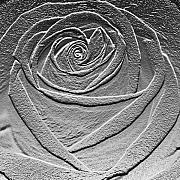 Abstract Rose Digital Art - Metal rose by Carol Lynch