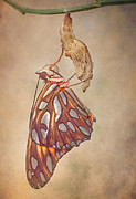Gulf Fritillary Photos - Metamorphosis by David and Carol Kelly