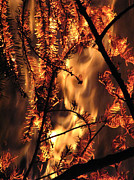 Fire Burns Metal Prints - Metamorphosis Metal Print by Rory Sagner