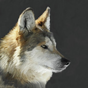 Wolf Portrait Paintings - Mexican Grey Wolf Portrait Freehand by Ernie Echols