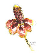 Watercolor And Ink Paintings - Mexican Hat A Texas Wildflower by Kathleen McElwaine