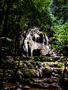 Tim Hester - Mexican Jungle Waterfall