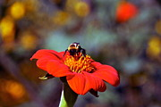Byron Varvarigos - Mexican Sunflower Open House Party Time