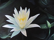 White Waterlily Paintings - Mexican Waterlily by Marion Leyland