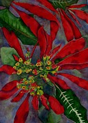 Deane Locke - Mexican Wild Poinsetta
