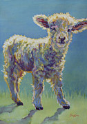 Ovine Framed Prints - Mia Framed Print by Patricia A Griffin