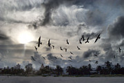 Beach Sand Birds Flying Clouds Sun Sky Trees Grass Building Day Beautiful Wings Flock Prints - Miami  Print by Glamour Optics