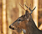Michael Peychich - Michigan whitetail 1107