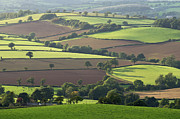Mid Devon Fields Print by Pete Hemington