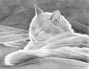 Kittie Prints - Mid-morning Meditation Print by Suzanne Schaefer