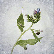 Botany Photo Prints - Mid Summer Scent Print by Priska Wettstein