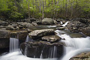 Emerge Prints - Middle Prong of the Little Pigeon River 1 - D008437 Print by Daniel Dempster