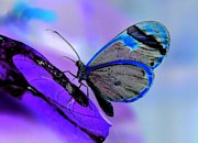 Surrealism Digital Art - Midnight Butterfly by Gail Girvan
