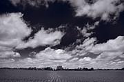 Midwest Corn Field Bw Print by Steve Gadomski