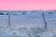 Barbed Wire Fences Prints - Midwest Winter Print by E B Schmidt