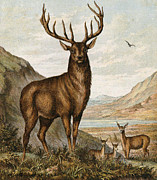 Faun Painting Posters - Mighty Elk. Lord of his Lair. Poster by Pierpont Bay Archives