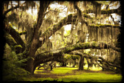 St Barbara Art - Mighty Live Oak by Barbara Marie Kraus