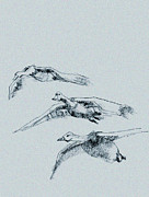 Geese Drawings Prints - Migrating Canadian Geese in flight Print by Richard Gage