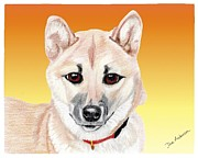Animal Shelter Drawings - Mikey a former shelte sweetie by Dave Anderson