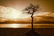 Scottish Art - Milarochy Bay Tree Loch Lomond by John Farnan