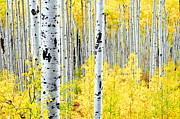 The Forests Edge Photography - Miles of Gold