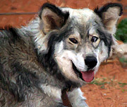 Michael Braham - Miley The Husky With...