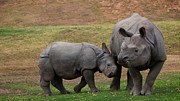 One Horned Rhino Photo Prints - Mili and Sundari  Print by Steve LLamb