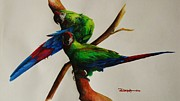 Macaw Drawings - Military Macaws by Dana Newman