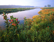 Glacial Park Posters - Milk Weed Morning Poster by Ray Mathis