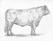 Agriculture Drawings Posters - Milking Shorthorn Bull Poster by J E Vincent