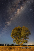 Moonlit Art - Milky Way And Tree In Moonlight by Philip Hart