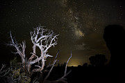 Juniper Photos - Milky Way over Arches National Park by Adam Romanowicz
