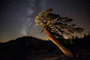 About Light  Images - Milky Way over Pine Tree