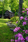 Grist Mill Art - Mill and Rhododendrons by Larry Ricker