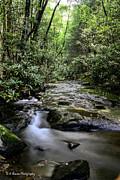 Barbara Bowen - Mill Creek