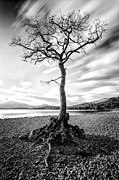 Scottish Landscape Framed Prints - Millarochy Bay Tree Framed Print by John Farnan