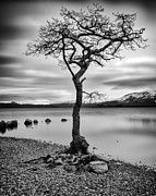 Ansel Adams Framed Prints - Millarochy Tree Loch Lomond Framed Print by John Farnan